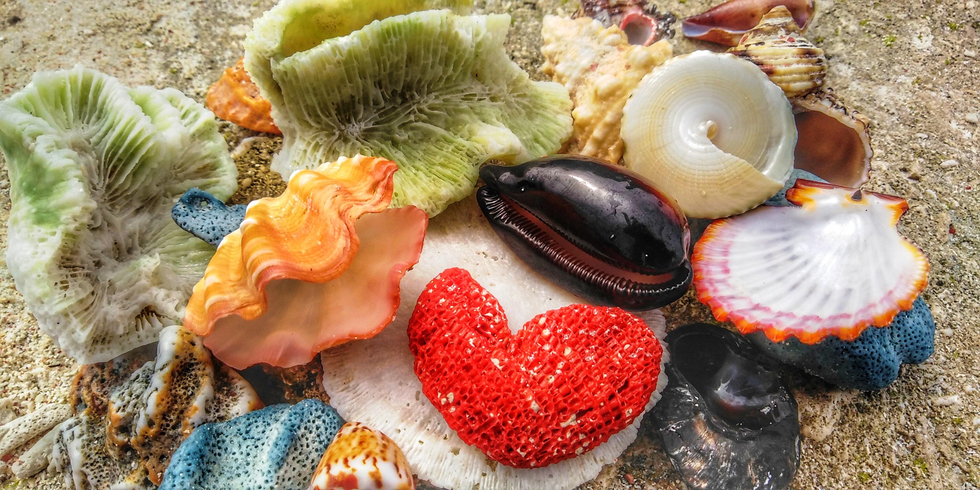 Indonesia tutti i colori del mare