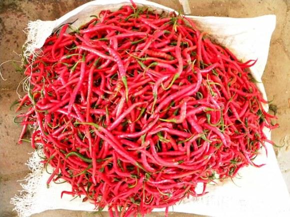 Indonesia peperoncini piccanti