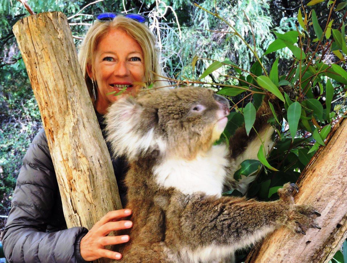 Australia amico koala
