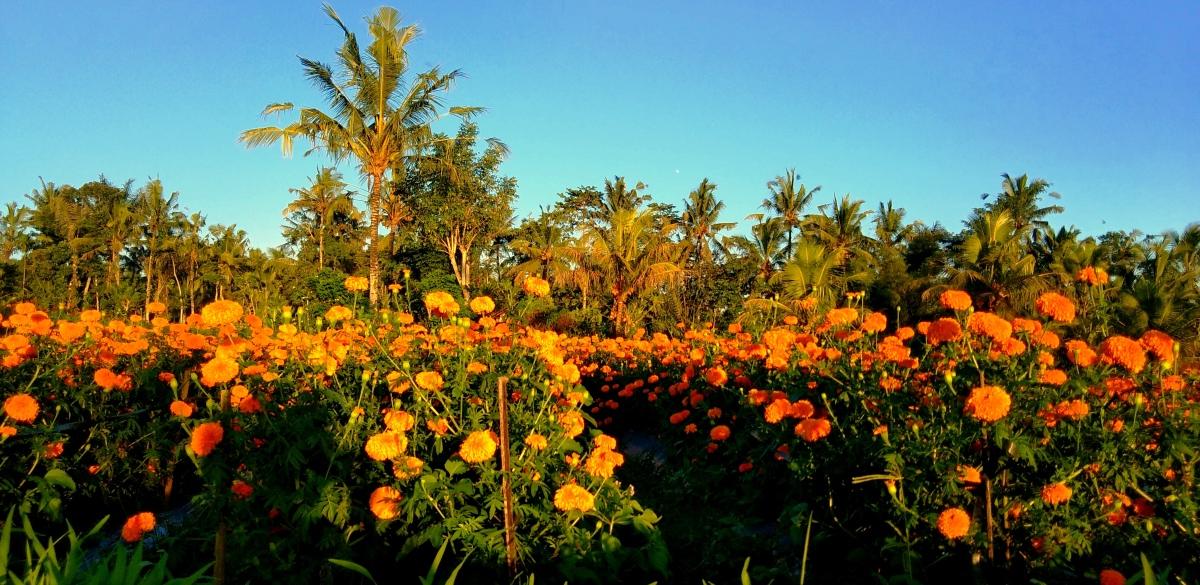 Bali campi di gemitir