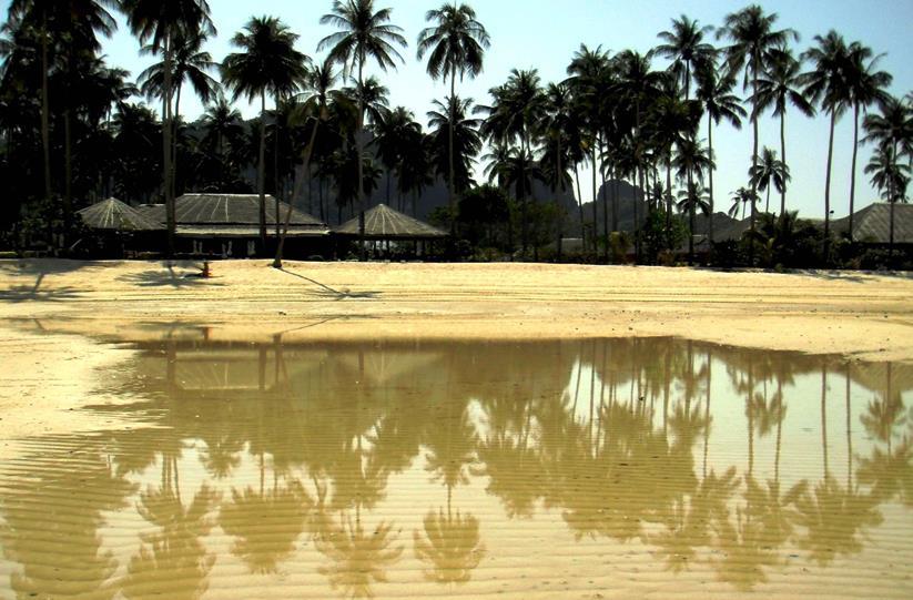 Phi Phi Loh Lana Bay, palme e mare