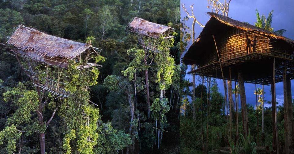 kombai abitazioni sugli alberi