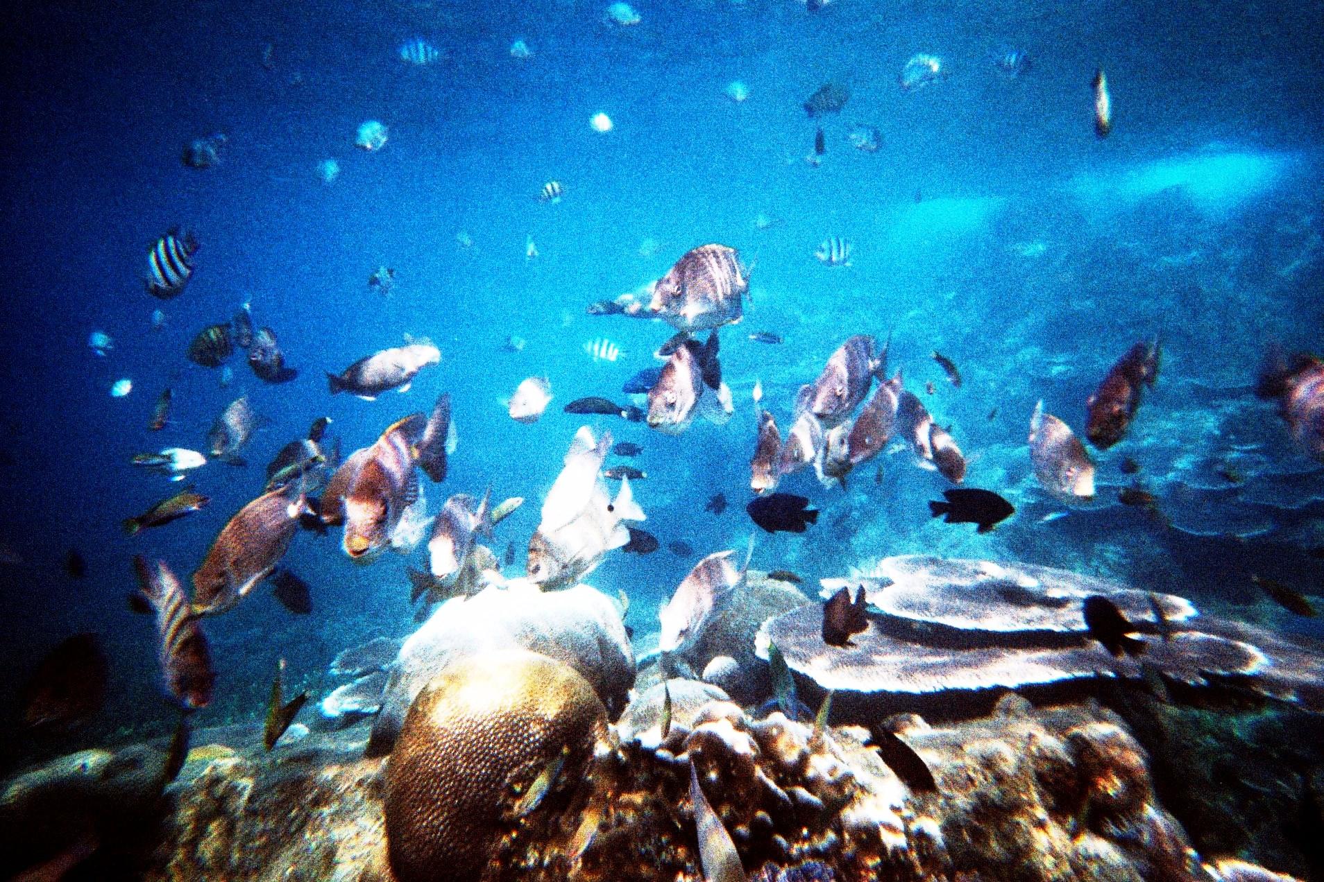 Molucche snorkeling